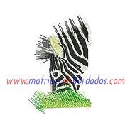 VA47JQ - Cebra