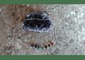 Cadena plata con piedras de los 7 chackras