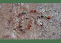 Pulsera de acero con piedras de los 7 chakras
