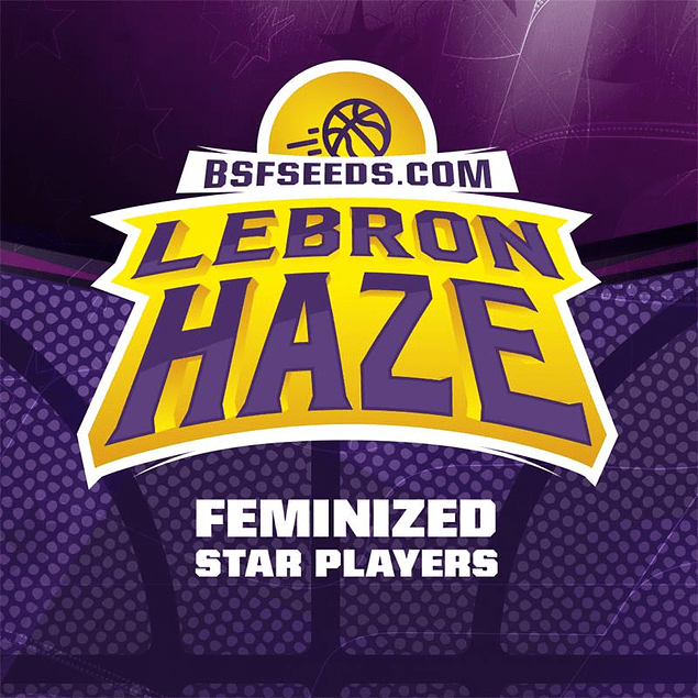 Lebron Haze X4 - BSF Seeds