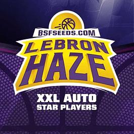 Auto Lebron Haze XXL X2 - BSF SEEDS