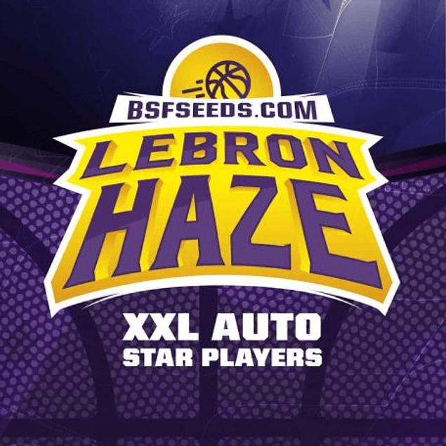 Auto Lebron Haze XXL X4 - BSF SEEDS