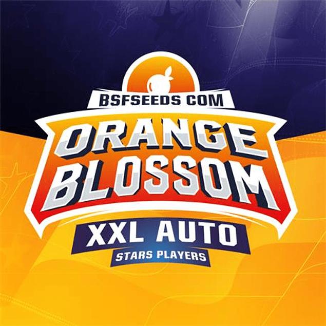 Orange Blossom XXL Auto X2 - BSF Seeds