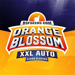 Orange Blossom XXL Auto X4 - BSF Seeds