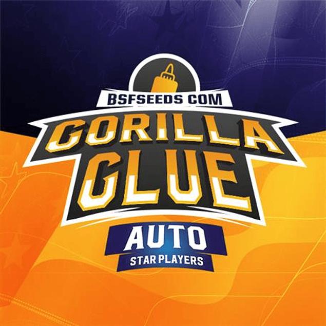Gorilla Glue Auto X2 - Bsf Seeds