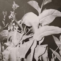 CD Nueva Costa - El Grán Espíritu