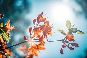 Nutrir la Autoestima Fecha: 13 de Octubre, 2019