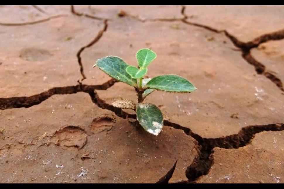 Resiliencia, una cualidad poderosa  Fecha: 08 de Julio, 2020