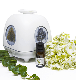 Aceite esencial- Aromaterapia - Romero