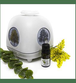 Aceite esencial- Aromaterapia - Eucalipto