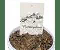 Microorganismos uso agrícola