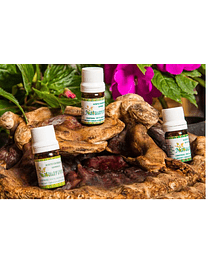MINT CANELA ESSENTIAL OIL