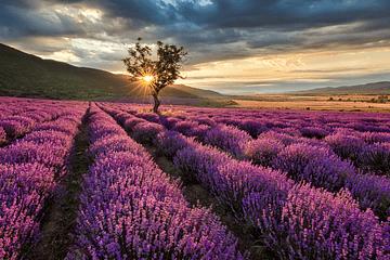 Aceites esenciales - su uso en aromaterapia
