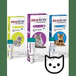 Bravecto Transdermal para Gatos