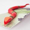 Animal Apretable/serpiente coral