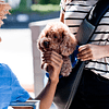 Sling para Mascota -Pet Sling L Negro  DPETC024-BK