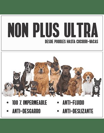 Alas Plus Ultra
