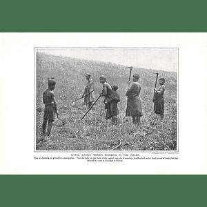 1910 Natal Native Women Working In The Fields