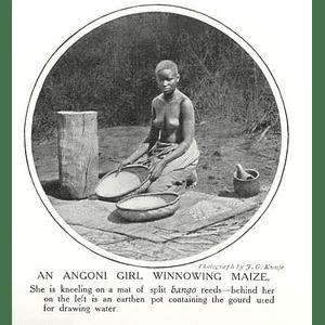 1910 Angoni Girl Winnowing Maize