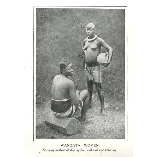 1910 Wangata Women, Congo Free State Head Shaved, Scar Tattooing