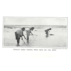1910 Girls In Tonga Fishing With Nets On The Reef
