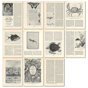 1963 John White And The English Naturalists , Article