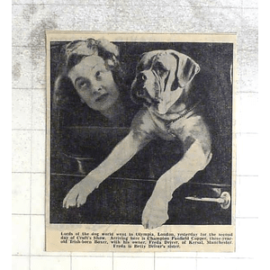 1950 Crufts Show, Champion Penfield Copper With Freda Driver