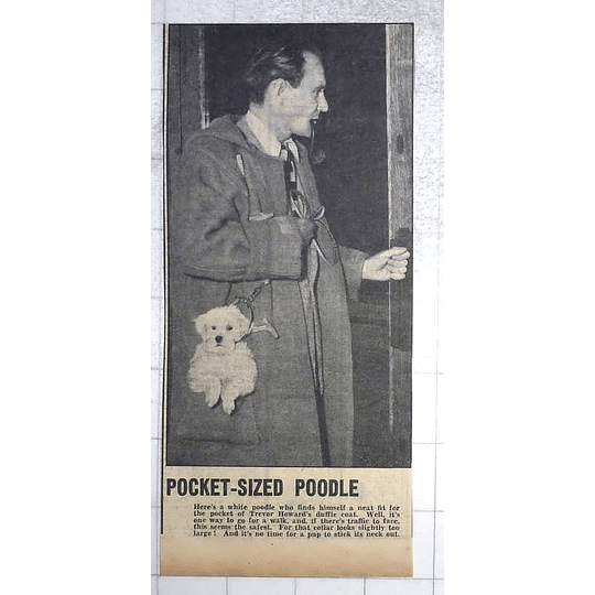 1950 Trevor Howard With His Pocket Sized Poodle In Duffle Coat