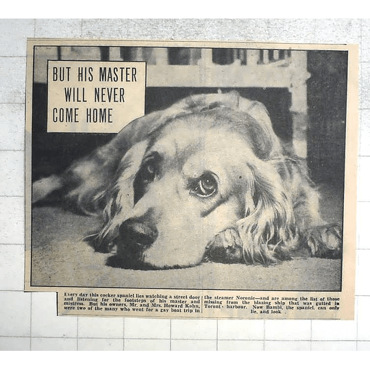 1950 Bambi The Cocker Spaniel Of Mr And Mrs Howard Kohn, Noronic Victims