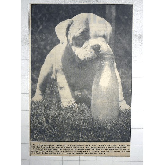 1950 Champion Bulldog Puppy Of Eustonian Lizzie Of Watford