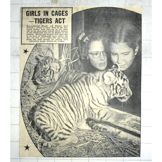 1950 Ist Tiger Cubs Born At Whipsnade Since The War, Wendy And Pamela