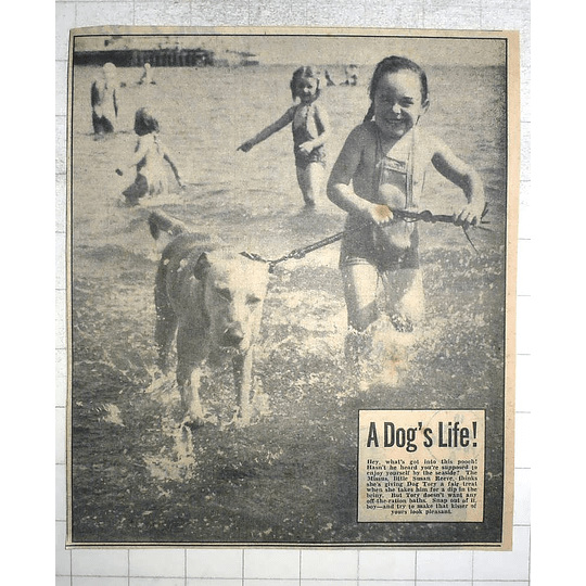 1950 Susan Reeve Taking Her Dog Tory For A Dip In The Sea