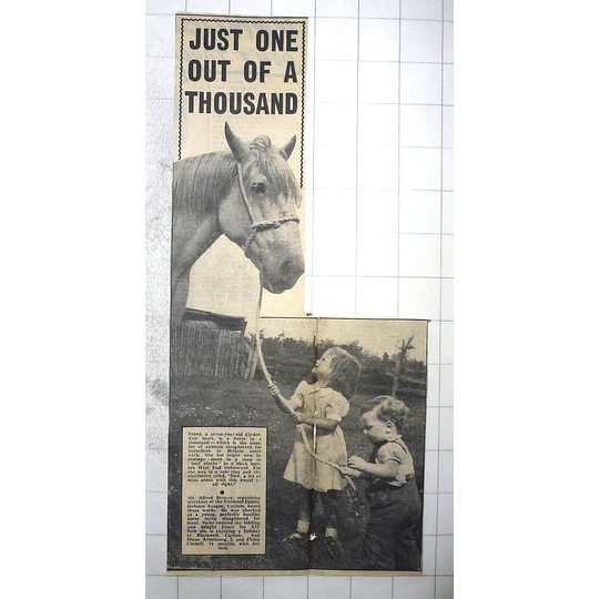 1950 Carlisle Equine Defence League, Blackwell, Diane Armstrong, Philip Catmill