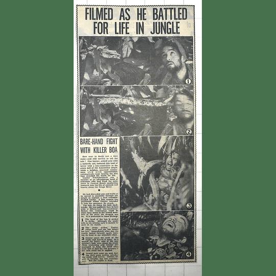 1950 Gunter Schreckenback Fighting With Killer Boa Constrictor In Amazon Jungle