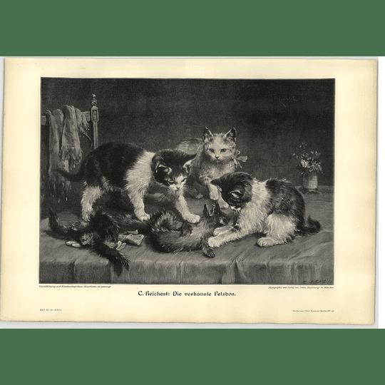 1902 C Reichert ~ 3 Kittens Palying With A Ferret Artwork