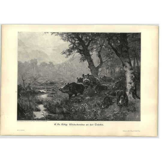 1902 G Fr Rotig ~ Wild Boars Coming To Drink In The Woods.. Artwork