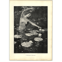 1902 F M Bredl ~ Water Lilies Artwork