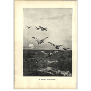 1902 C Vastagh ~ Wild Ducks Flying In The Marshes Artwork