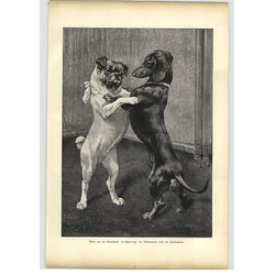 1902 H Sperling ~ Pug And Dachshund, Reunion Artwork