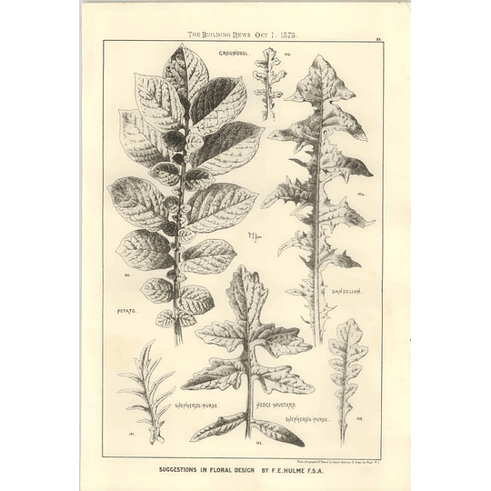 1875 Floral Design Inspiration From Potato, Dandelion, Shepherds Purse,