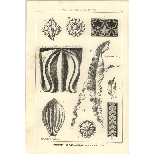 1875 Design Inspirations From Narrow Leaved Dock, Broadleaved Plantain