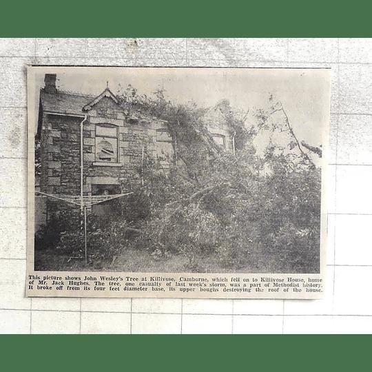 1974 John Wesley's Tree At Camborne Falls Onto Jack Hughes House