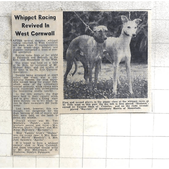 1974 Whippet Racing Revived At St Erth, Shaheen, Bacchus