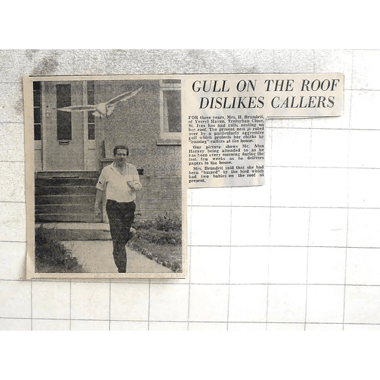 1974 Mrs H Brundrit, Treloyhan Close St Ives Has Seagull Watchdog