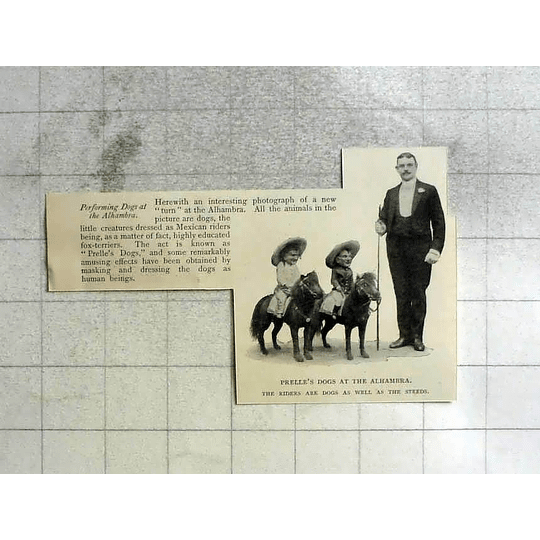 1904 Performing Dogs At The Alhambra Prelle