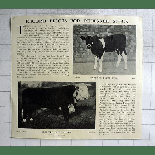 1918 Record Prices For Pedigree Stock, Bull Ringer Sold 9000 Guineas Twyford