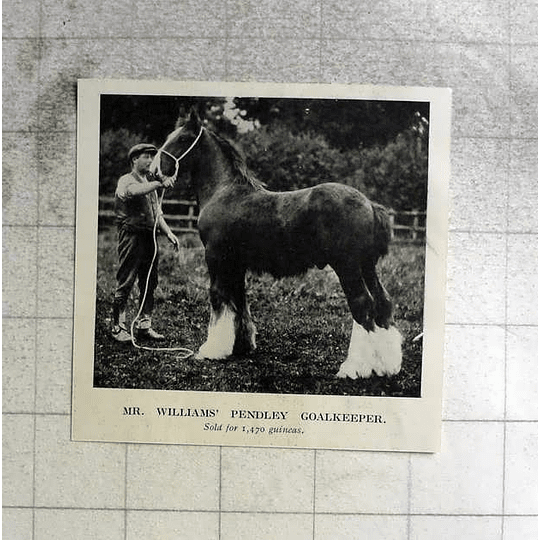 1918 Mr Williams Pendley Goalkeeper, Shire Horse Sold For 1470 Guineas