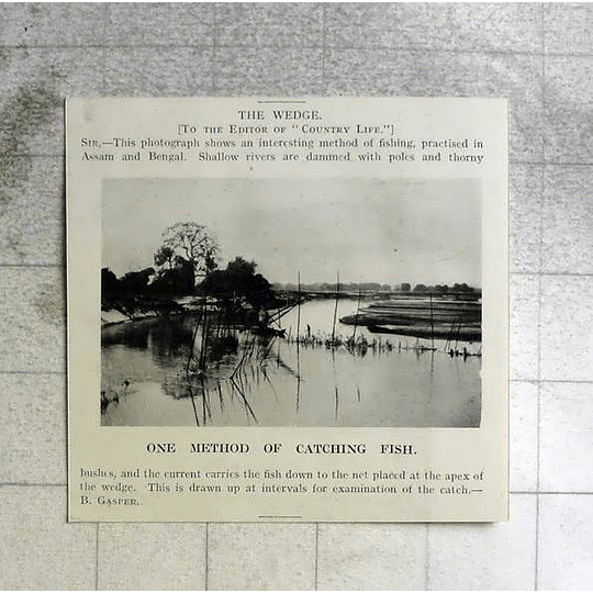 1918 One Method Of Catching Fish In Assam, Bengal, The Wedge