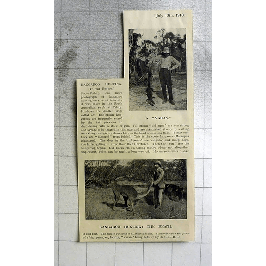 1918 Kangaroo Hunting In The South Australia Scrub At Tilmy
