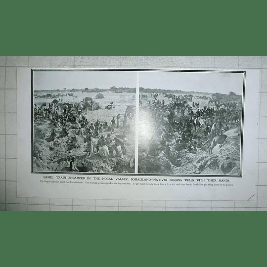 1903 Camel Train Encamped Nogal Valley Somaliland Native Digging Wells